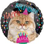 Kočičí narozeniny