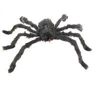 Chlupatý pavouk černý